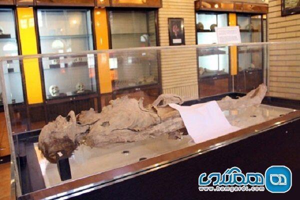 اعلام ثبت ملی جسد مومیایی شده یزد