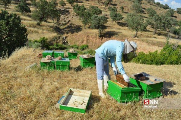 مرکز رشد کسب و کار فناورانه روستایی مازندران راه اندازی می شود