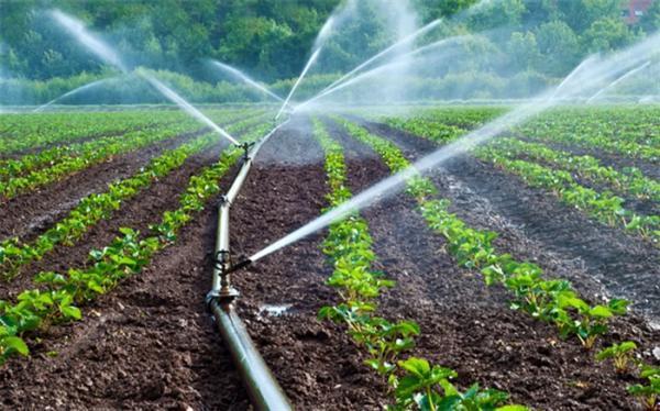 محصولات کشاورزی در شرق اصفهان با پساب آبیاری می شوند؟
